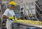 Виробництво картопляних пластівців Mydibel